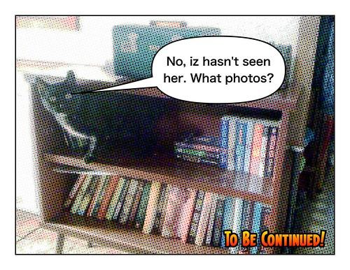 Cat Tales #3