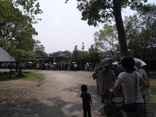 母子鹿の特別公開@鹿苑角きり場-02
