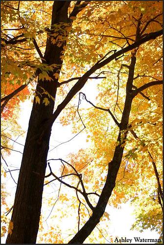 """""""An Autumn Dream"""""""
