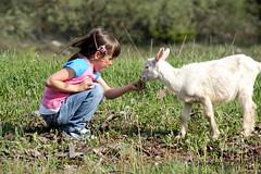 Gioco e natura (photolupi) Tags: italia natura campagna val di bianca luigi trentino bambina fiemme capretta piazzi photolupi agritour luigipiazzi