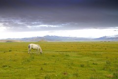 (Luo Shaoyang) Tags: china sky horse nature grass landscape nikon scenery ground tibet    madeinchina         nikond200       landscapephotos ultimateshot diamondclassphotographer luoshaoyang