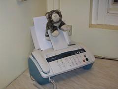 Cat on fax machine