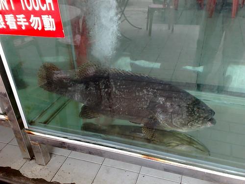 Lontun fish.