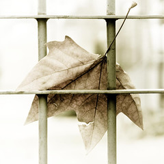 Farewell (Lumase) Tags: fall love topf25 loss square leaf topf50 bravo poetry poem gone farewell fallen fade ghosts goodbye fading topf100 polaris naturesfinest athousandwords fivestarsgallery lumase infinestyle diamondclassphotographer womblekingdomelite theunforgettablepictures lumapo theperfectphotographer ofcreativa 50plusfaves2008 goodbyesarehardenough silentlovewillalwaysbe apieceofmeandyou nomorefarewells