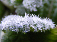 Spikes of ice. (stormlover2007) Tags: winter macro ice nature leaves garden frost spikes digitalcameraclub theworldisbeautiful superbmasterpiece diamondclassphotographer flickrdiamond goldstaraward