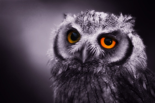 Eyes Of A Night Owl (by left-hand)