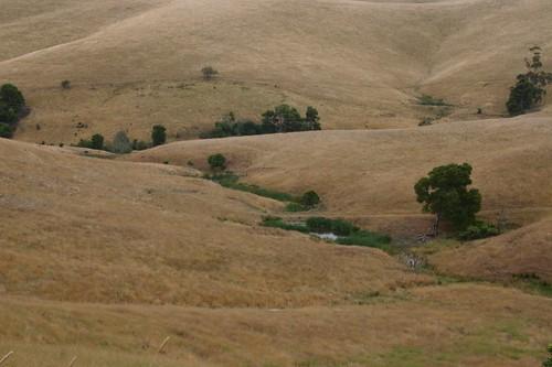 Fields near Leongatha, VIC.