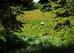 Simply Amazing (RoystonVasey) Tags: summer tree green wow garden cornwall fuji nt 2006 gazebo national hedge finepix maze thatch kernow glendurgan turst f440 glendurgangarden