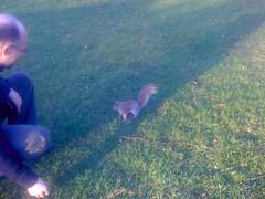 Squirrels in Regent Park