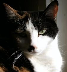 Kiki (Ann Kerwin) Tags: cats dogs cat kittens felines