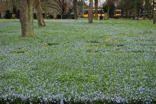 墓地にも花の絨毯が