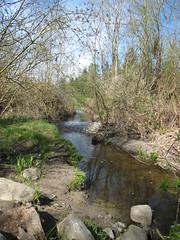 Kelsey Creek Park Stream