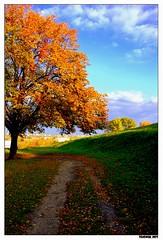 Idyll (flakonik) Tags: autumn idyll pastoral