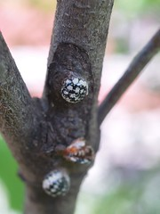 What is This? (maggie_and_her_camera) Tags: dogwood horticulture johnshopkinshospital maggieneely