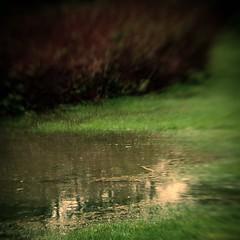 IMG_3347 (Cat Sidh) Tags: rain southernindiana floods lensbaby20 bloomingtonmonroecountyindiana