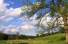 (:Linda:) Tags: sky cloud tree germany village wolke thuringia cloudysky wolkig woodstack lumberpile brden bewlkterhimmel