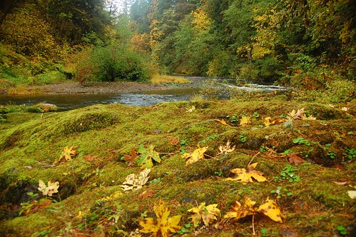 Leaves, moss, and a creek