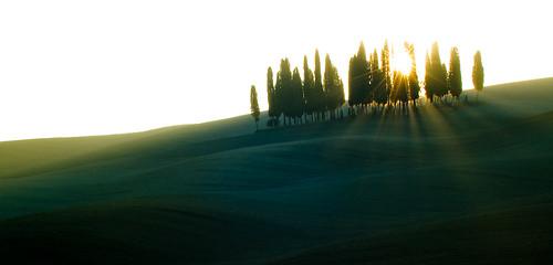 Alba al boschetto dei cipressi - 2