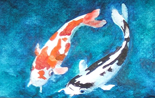 koi friends