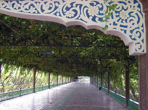 A Grape Arbor