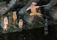 "Raccoons - ""Flying Fox Master II"" (valentinokh) Tags: nature animals photoshop crazy master hero kh raccoons digitalimaging swordsman actionflick"