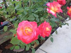 P4230055.JPG (Gail Chris Spinks) Tags: florafauna