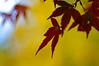 Good Bye Autumn, Hello Winter (bluehazyjunem) Tags: winter red yellow shinjukugyoen 2007 anawesomeshot aplusphoto top20yellow top20everlasting