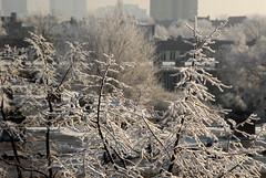 07B_2399 (Enrico Webers) Tags: cold netherlands amsterdam canal frozen bevroren nederland canals nl kanaal ams amstel 2007 gracht ijs 200712