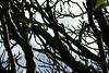 Thru the branches (Swami Stream) Tags: india gardens canon landscape botanical rebel bangalore images karnataka swami lalbagh swaminathan karntaka banaglore bengaluru xti 400d swamistream swamistreamcom