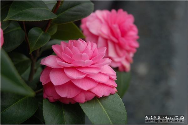 DSC_7242越之乙女(邱家花園)