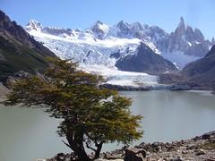 Fitz Roy - trek - lagune - glacier - sommets - arbre