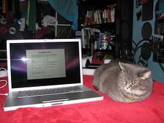 Even the cat love it! (Alex-83) Tags: apple macintosh mac macbookpro