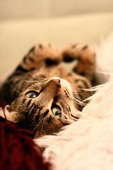 Such a look ! (ngpfjoyce) Tags:  kissablekat