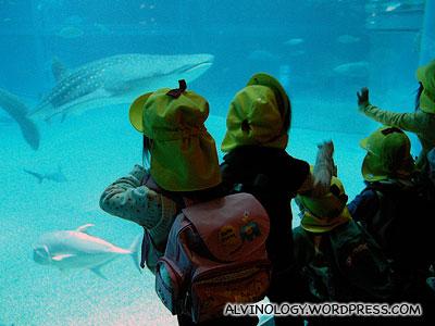 School kids gawking at the whale shark