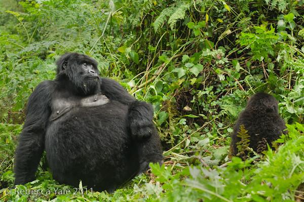RYALE_Rwanda_Uganda_Safari-41