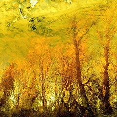Fin dautomne!!!/End of the autumn!!! (Denis Collette...!!!) Tags: autumn wild canada reflection automne river bravo searchthebest quebec rivire reflet qubec fin sauvage blueribbonwinner firstquality magicdonkey artlibre aplusphoto theunforgettablepictures deniscollette wildriver world100f theend thedoors