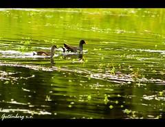 No Lago Verde