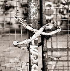 chained (pjbarford) Tags: abstract sepia rust chain hasselblad scanned neopan400 500cm