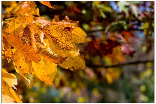 Fall leaves BackYard II