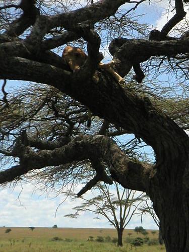 lionne-arbre
