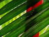 Ready in Red (AraiGodai) Tags: red plant macro green interestingness interesting explore shade araigordai raigordai araigodai
