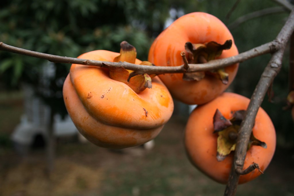 astringent persimmon how to eat