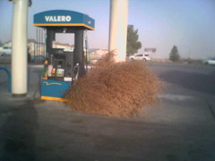 Tumbleweeds are free (jeh amm ink) Tags: fone