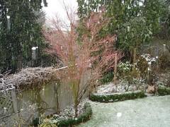 Christmas 2007 Snow c