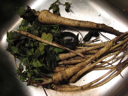 Parsnips in Sink
