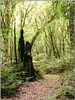 papel de parede (Alex Hackmann) Tags: nature canon photo woods track foto natureza g6 mata canong6 papeldeparede trilho alexhackmann