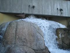 IMG_0844.JPG (joelaz) Tags: aquarium monterey acquarium
