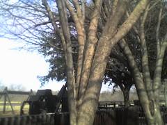 Triss' Tree