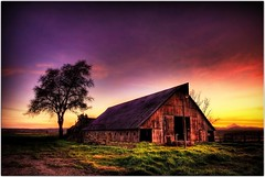 The Glowing Barn (Extra Medium) Tags: sunset tree barn rural scenery purple norcal hdr sutterbuttes infinestyle exif:iso=100 exif1mm