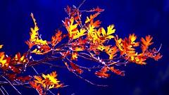 P1030220 (Surender Bodhireddy) Tags: nature welltaken instantfave onlyyourbestshots ilovemypic onlythebestare mothernatureatherbest bestnaturetnc07